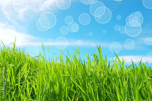 Sfondo Primavera Verde E Azzurro Terra Verde Buy This Stock