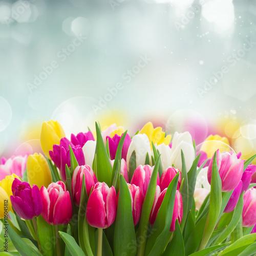 bukiet-rozowe-fioletowe-i-biale-tulipany