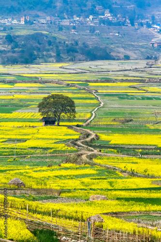 Papiers peints Jaune Blossom bustard Nepal