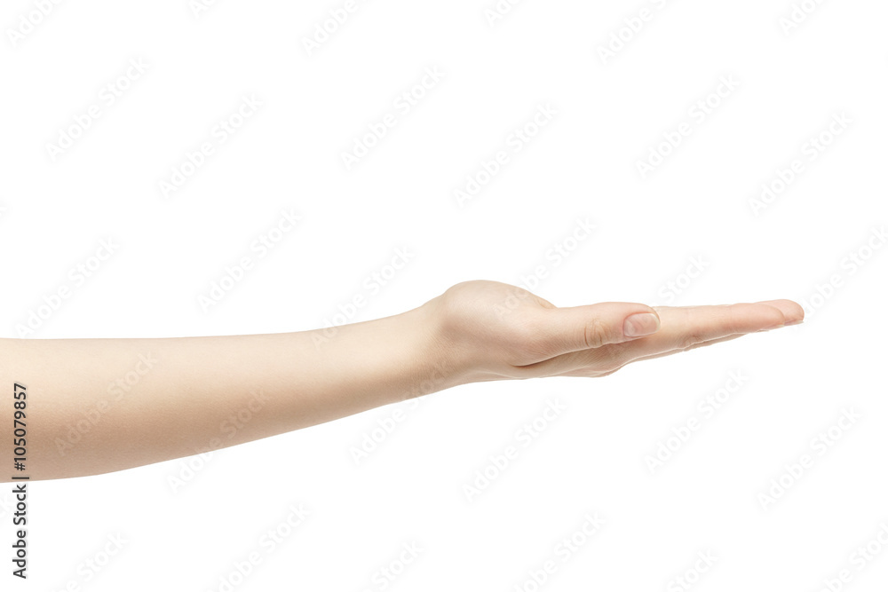 Fototapeta empty young female hand to hold something straight, isolated on white background