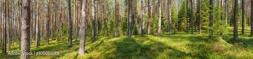 Papiers peints Forets Panoramic view of fir forest on a summer day
