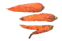 Three Rotten, Dry, Dead Carrot...