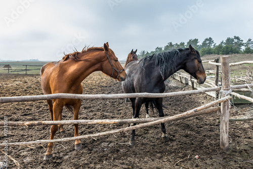 Photo  Horses are trained in the aviary. Ukraine.