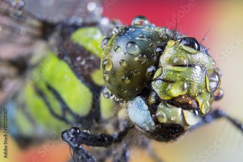 In de dag Macrofotografie dragonfly, macro, eye, nature, water drops