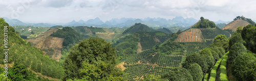 Canvas Prints Guilin Karst mountains and kumquat trees plantation near Yangshuo