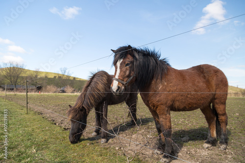 Two horses on farm