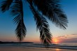 Tropical sunset over palm tree