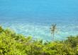 Beautiful sea background. Palm tree on a background of blue sea