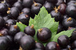 Black currant with leafs top view