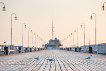Seagull On The Wooden Pier In ...