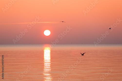 Poster Corail Golden sunrise over the sea
