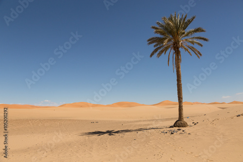 Staande foto Droogte palm trees in the sand desert of Merzouga
