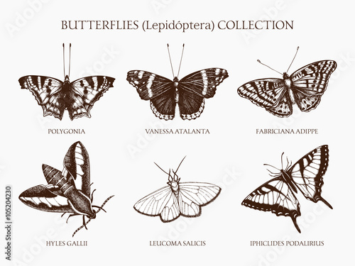 Photo sur Toile Papillons dans Grunge Vintage collection of ink hand drawn butterflies illustration . Realistic vector butterfly sketch set isolated on white