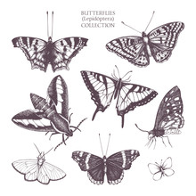Vintage Collection Of Ink Hand Drawn Butterflies Illustration . Realistic Vector Butterfly Sketch Set Isolated On White
