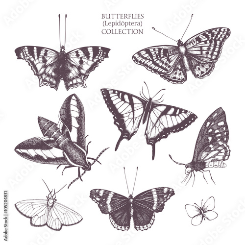 Fotobehang Vlinders in Grunge Vintage collection of ink hand drawn butterflies illustration . Realistic vector butterfly sketch set isolated on white
