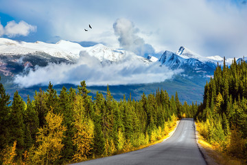 Naklejka . Canadian Rockies in Fine day