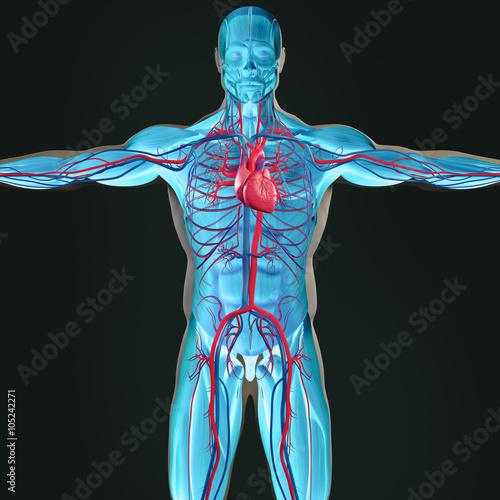 Human anatomy 3D futuristic scan technology with xray-like