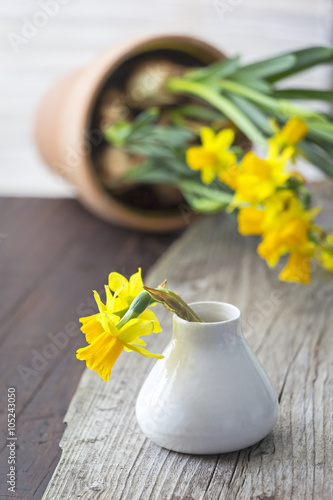 Narcissus Daffodils in a vase on the table