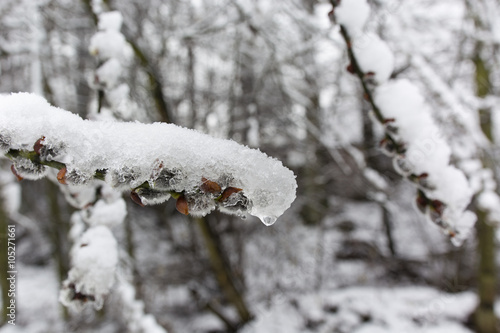 branch with snow and ice with woods in the background Poster