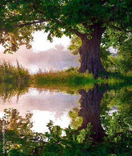 Foto op Plexiglas Landschappen Beautiful Summer sunset, tre reflected in still waters of lake