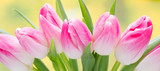 Fototapeta Tulipany - Spring flowers. Tulip bouquet on the bokeh background.