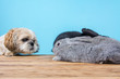 dog and rabbit have fun