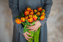 Orange Tulips In Girls Hands.