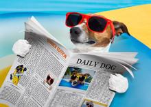 Dog Newspaper Reading