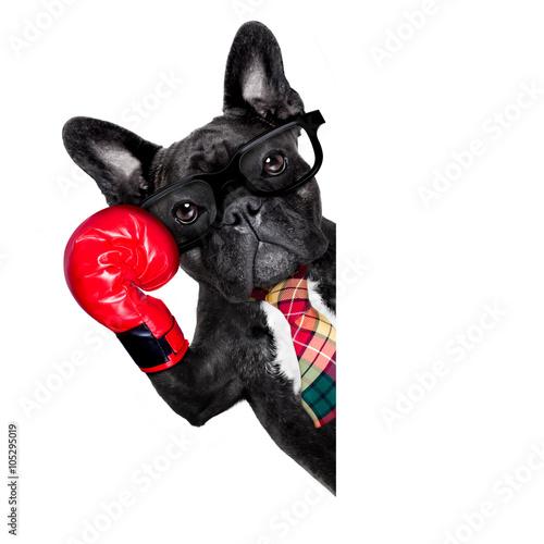 Photo  boxing dog