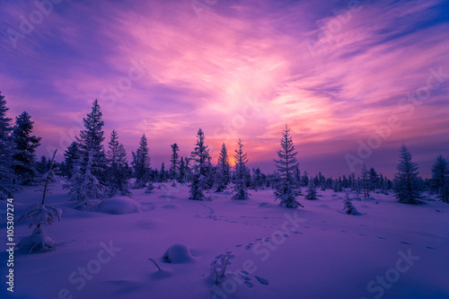 Fotobehang Snoeien Winter Evening Landscape with forest, cloudy sky and sun