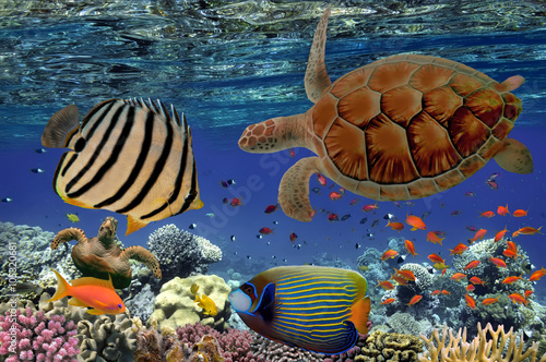 Pinturas sobre lienzo  Coral Reef and Tropical Fish iin the Red Sea, Egypt