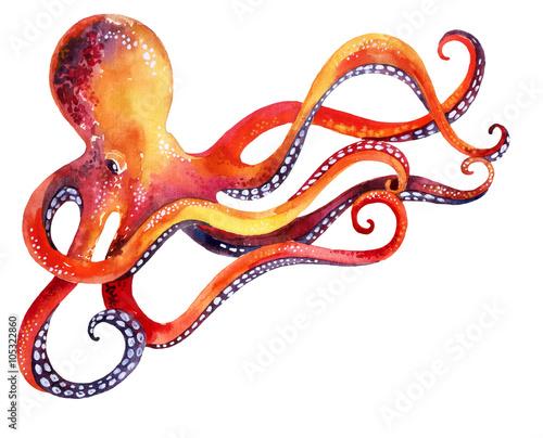 Carta da parati octopus