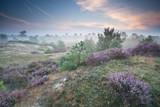ling kwiaty na wzgórzach w mglisty poranek - 105324026