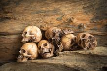 Skull On Wood Background