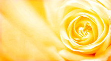 Grunge Banner With Yellow Rose And Paper Texture
