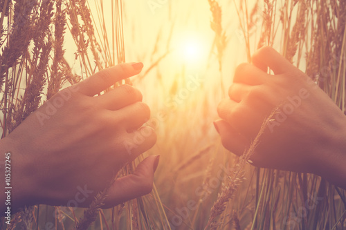 Fotomural  Female hands in wheat-field.