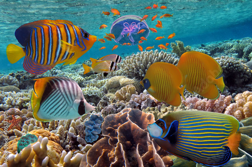 coral-reef-and-tropical-fish-in-the-red-sea-egyp