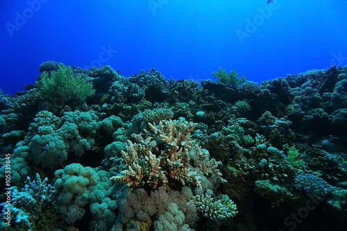 Staande foto Koraalriffen tropical sea underwater landscape