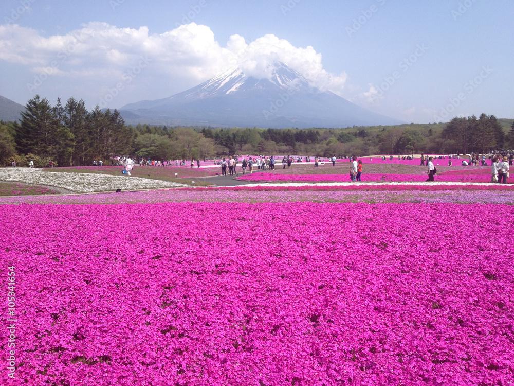 Photo Art Print Kawaguchiko An Fuji Shibazakura Pink Moss Phlox Europosters