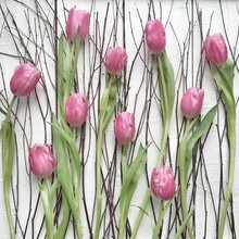 Close Up Of Pink Tulips And Twigs Against White Background