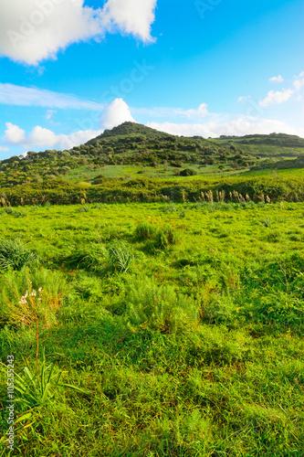 Spoed Foto op Canvas Nieuw Zeeland soft clouds over a green hill