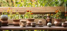 Ceramic Flowerpots Still Life