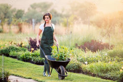 Fényképezés Gardener with seedling in wheelbarrow, sunny nature