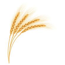 Wheat, Realistic Vector Illustration