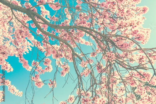 Photo  Spring blossom