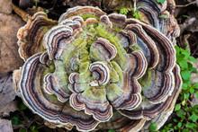Tree Fungus Mushroom
