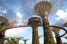 Singapore - March,2016.Gardens...