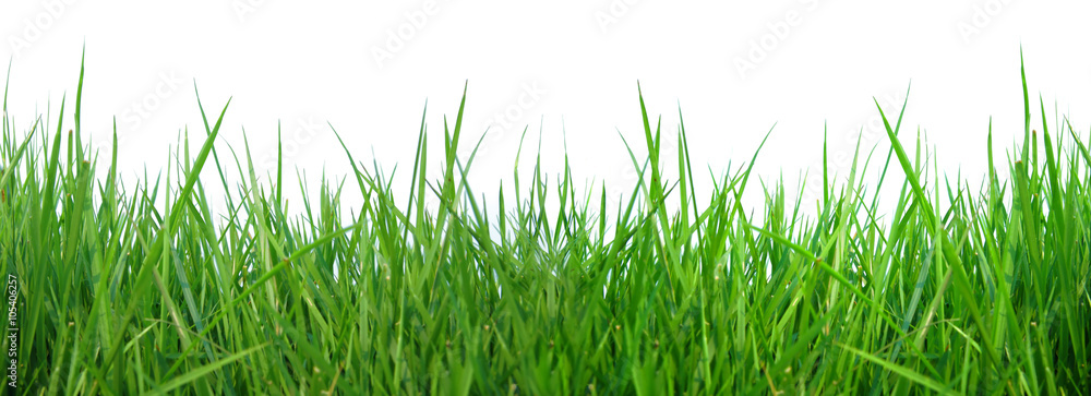 Fototapety, obrazy: close up fresh spring green grass panorama