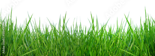 Photo sur Aluminium Herbe close up fresh spring green grass panorama