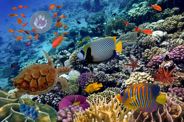 Fototapeta Rafa koralowa Colorful coral reef with many fishes and sea turtle